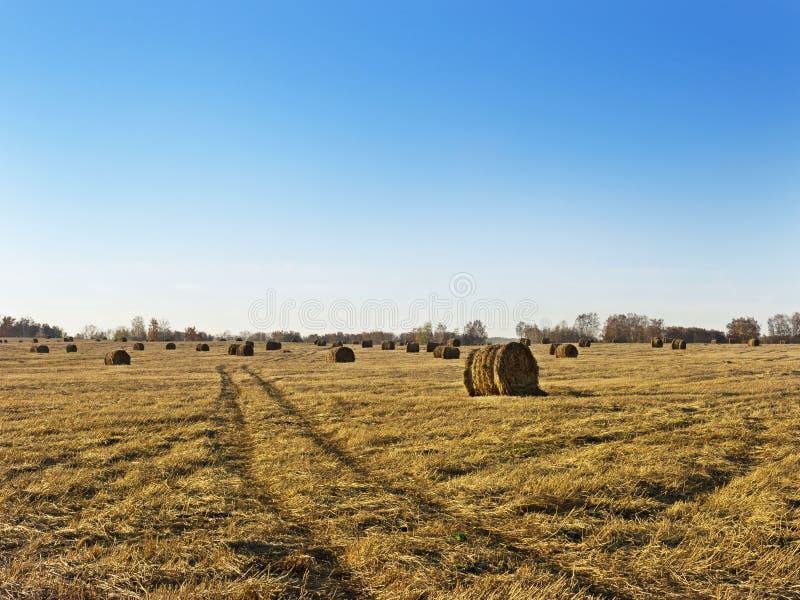 Wiejska krajobrazu pola łąka Z siano belami Po żniwa W Pogodnym wieczór Przy zmierzchem Lub wschodu słońca W późnym lecie fotografia royalty free