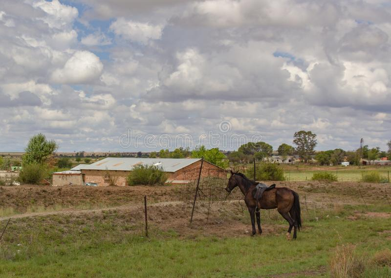 Wiejska sceneria z rolnym domem i brązu koniem wiążącymi ogrodzenie obrazy royalty free