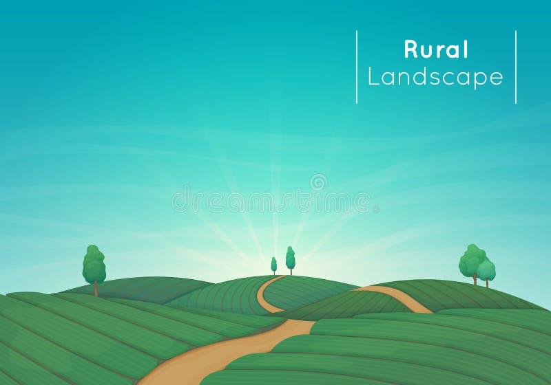 Wiejska uprawia ziemię krajobrazowa wektorowa ilustracja Zieleni rolniczy pola z drzewami i drogą gruntową ilustracji