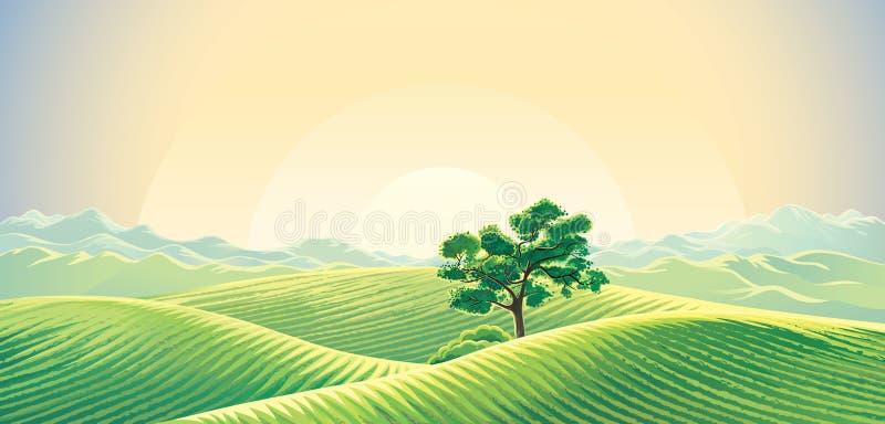 Wiejski świtu krajobraz i osamotniony drzewo royalty ilustracja