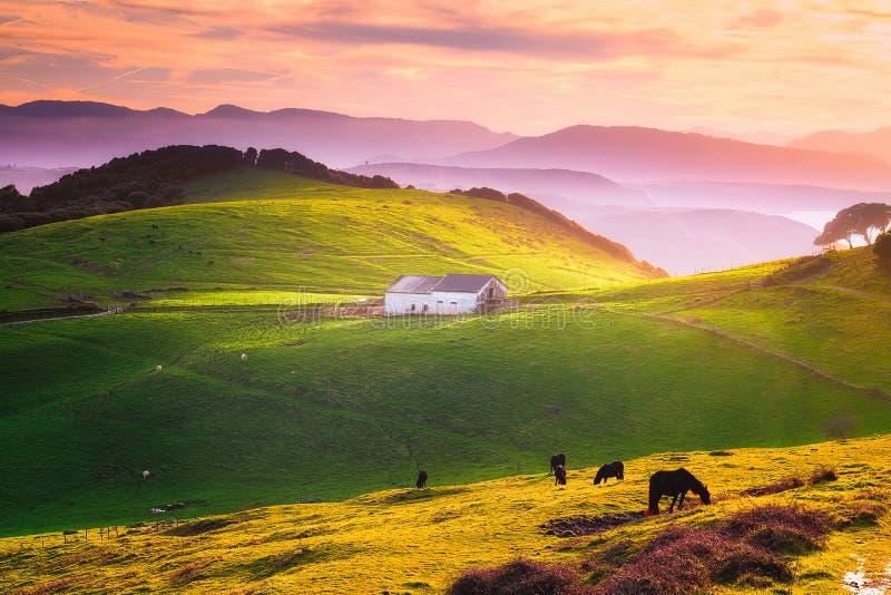 Wiejski gospodarstwo rolne w Gorliz zdjęcia royalty free