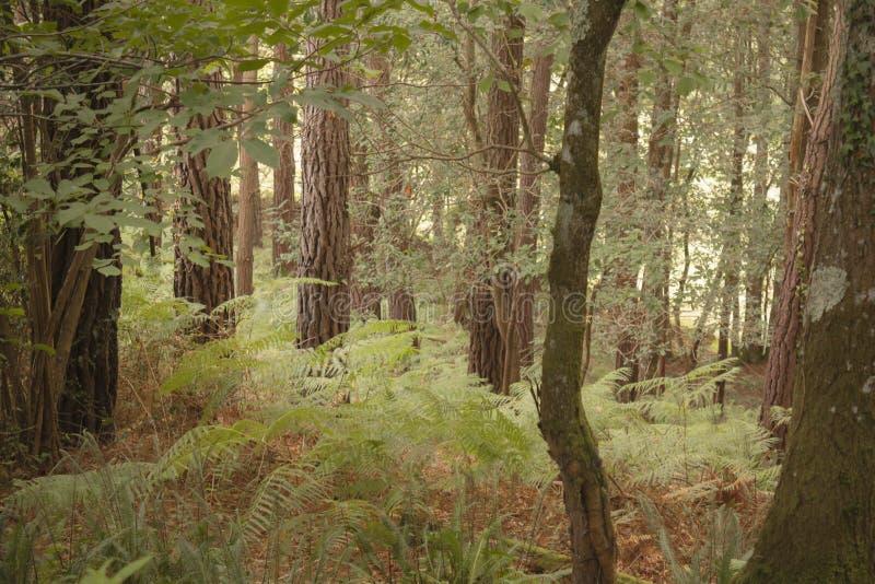 Wiejski krajobraz brzoza las z roślinnością w zielonych brzmieniach zdjęcia stock