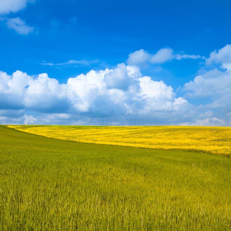 Wiejski krajobraz. Kolor żółty i zieleni pole z chmurnym niebieskim niebem obrazy stock