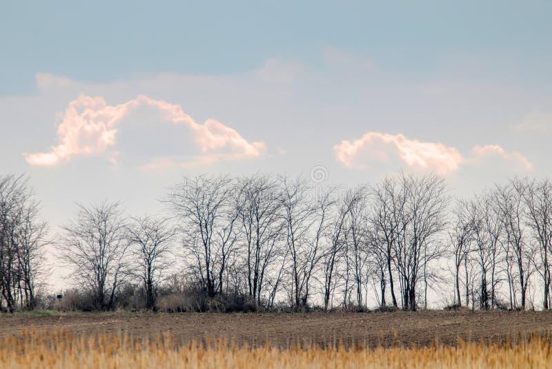 Wiejski krajobraz z bezlistnymi drzewami sylwetkowymi przeciw dużym chmurom fotografia royalty free