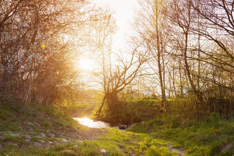Wiejski krajobraz z bourn, kwitnący drzewa, pogodna wiosny natura obrazy stock