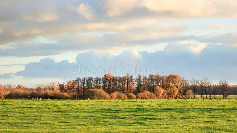 Wiejski krajobraz z drzewami w jesieni barwi, Turnhout, Belgia obrazy stock