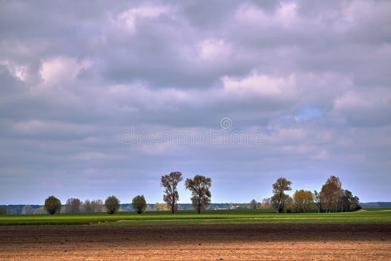 Wiejski krajobraz z kÄ™pami, drzewami i Å'Ä…kami latem obrazy stock