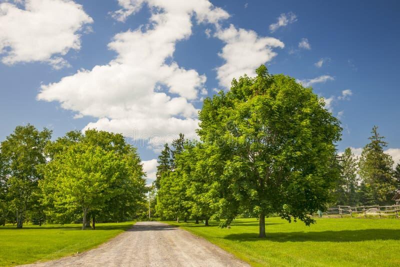 Wiejski krajobraz z klonowymi drzewami zdjęcie stock
