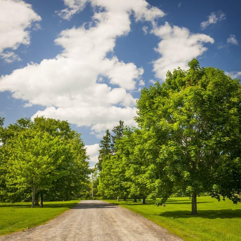 Wiejski krajobraz z klonowymi drzewami obraz royalty free