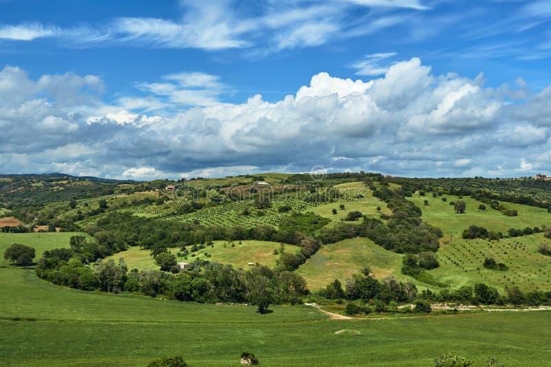 Wiejski krajobraz z oliwki dorośnięciem na wzgórzach fotografia stock