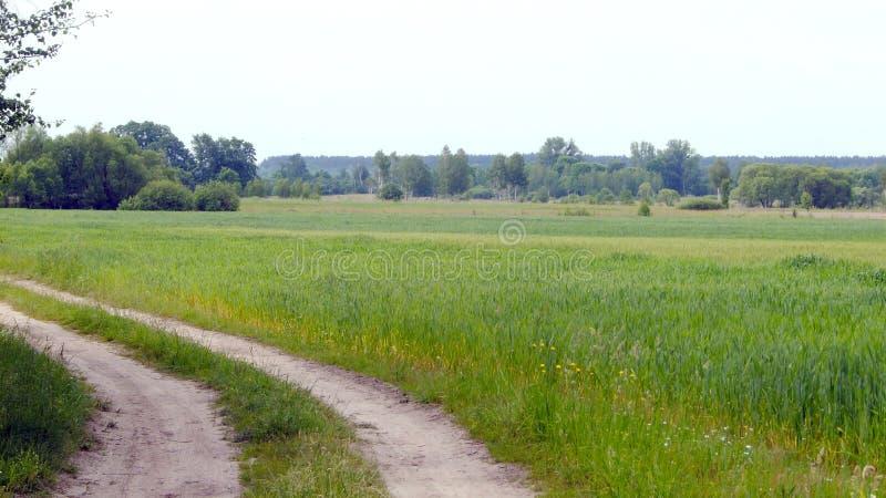Wiejski krajobraz z polem fotografia royalty free