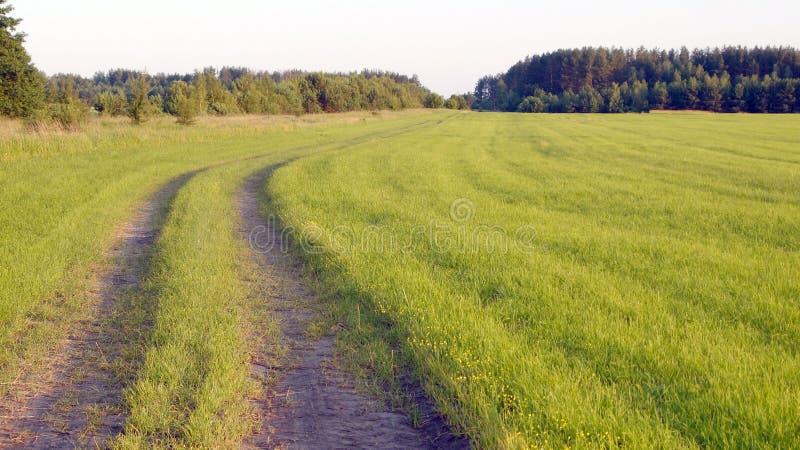 Wiejski krajobraz z polem zdjęcie stock