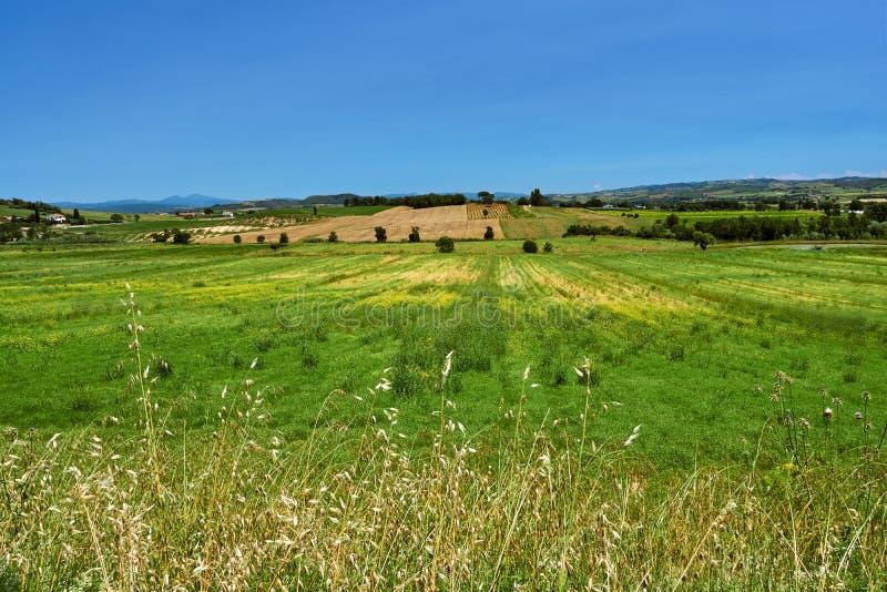 Wiejski krajobraz z winogradami r w wzgórzach zdjęcia stock