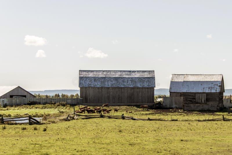 Wiejski Ontario gospodarstwo rolne z stajni rolnictwa zwierząt Kanada Silosowy składowy uprawiać ziemię obrazy royalty free
