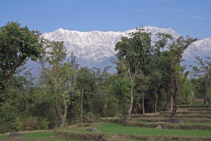 Wiejski organicznie krok uprawia ziemię w himalajach India obrazy royalty free