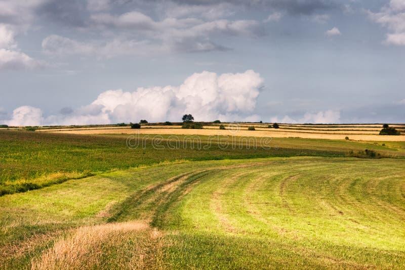 Wiejski pastoralny krajobraz z zielonej trawy bielem i polami chmurnieje niebo zdjęcie royalty free