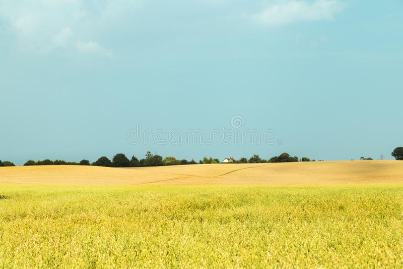 Wiejski pole krajobraz - Essex, UK obraz royalty free
