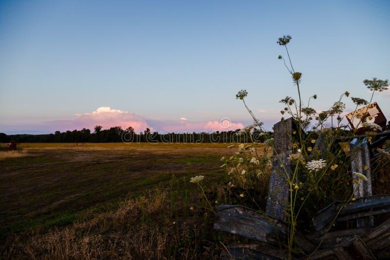 Wiejski rolny pole z wildflowers w zmierzchu i przedpolu chmurnieje w odległości zdjęcia royalty free