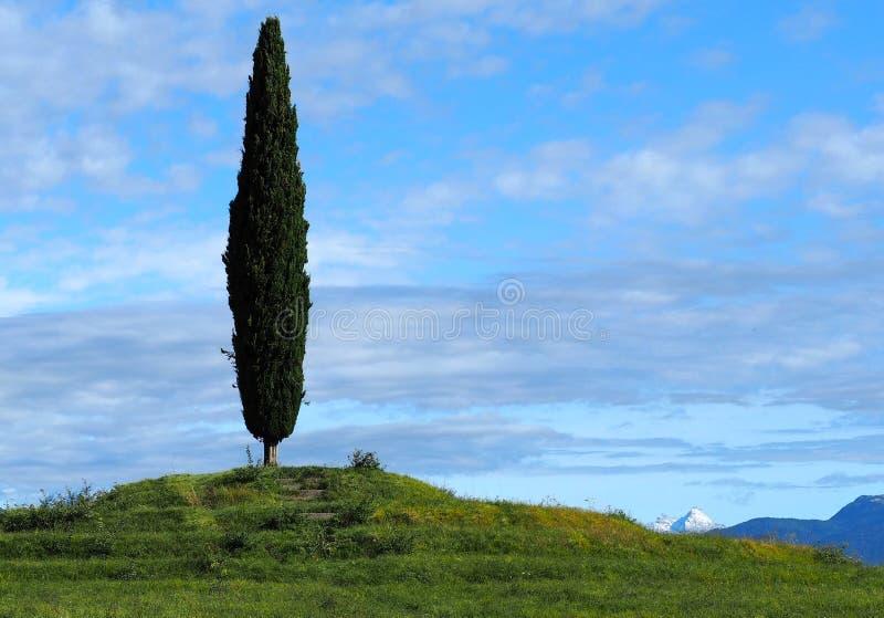 Wiejski tło Pojedynczy cyprys na górze małego wzgórza z chmurnym niebieskim niebem zdjęcie royalty free