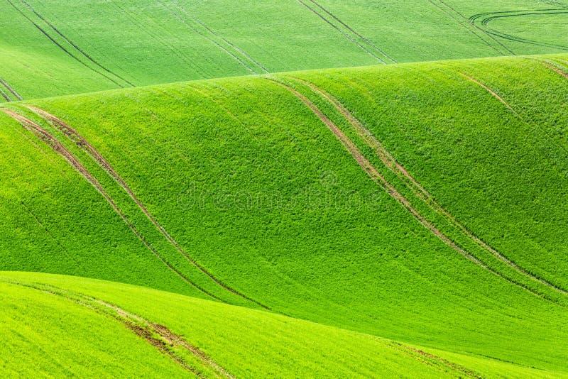 Wiejski wiosny rolnictwa tekstury tło Zielonych fala wzgórza w Południowym Moravia, republika czech Pole zielony krajobraz zdjęcia royalty free