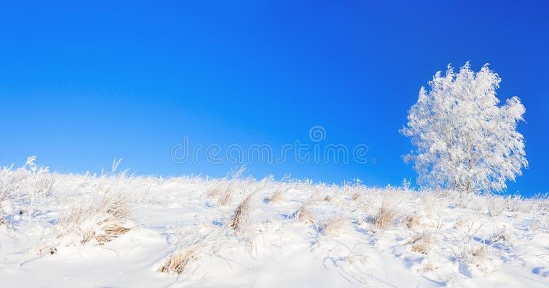 Wiejski zima krajobraz panorama z niebieskim niebem, polem, i fotografia stock