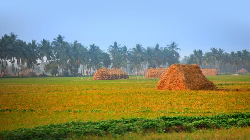 Wiejskie rolne ziemie w India zdjęcie stock