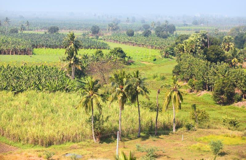 Wiejskie rolne ziemie w India obrazy royalty free