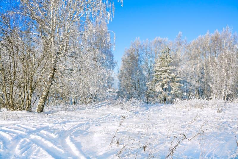 Wiejskiej zimy śnieżny krajobraz z lasem, polem, drogą i niebieskim niebem, obraz stock