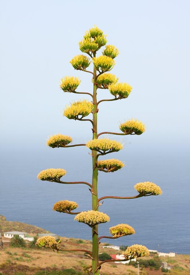 wiek roślina zdjęcie stock