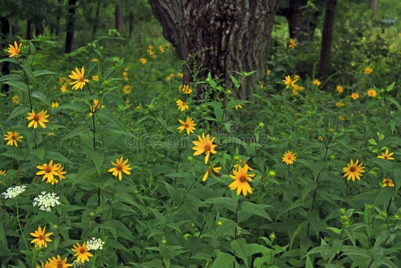 wieka kwiatów lasu lodu śladu kolor żółty zdjęcie stock