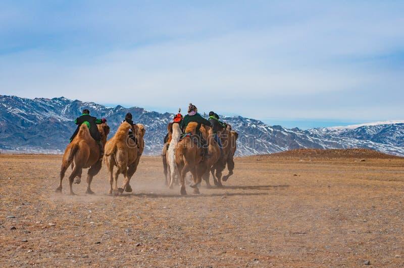 Wielbłąd biegowa rywalizacja podczas Złotego Eagle festiwalu trzymającego w zimie w Ulga Mongolia obrazy stock