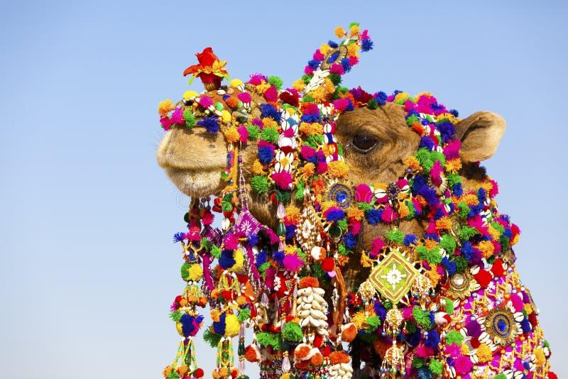 wielbłąd dekorujący pustynny festiwal obraz royalty free
