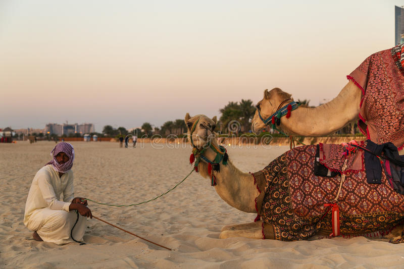 Wielbłąd kłaść w Dubaj Marina plaży zdjęcia stock