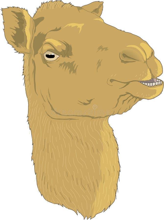 Wielbłąd Kierownicza ilustracja ilustracji