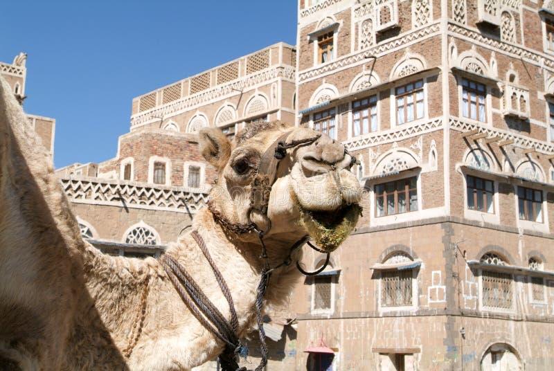 Wielbłąd przed dekorującymi domami stary Sana zdjęcia royalty free