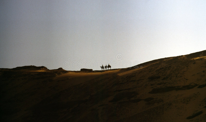wielbłąd pustyni zdjęcia stock