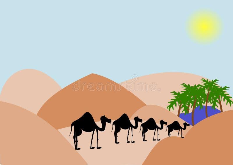 wielbłąd pustynia fotografia royalty free