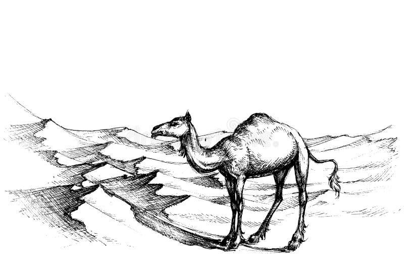 Wielbłąd w pustyni ilustracja wektor