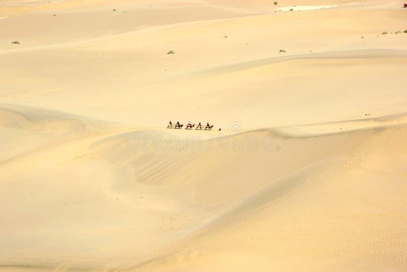 wielbłąda pustyni pociąg zdjęcie royalty free