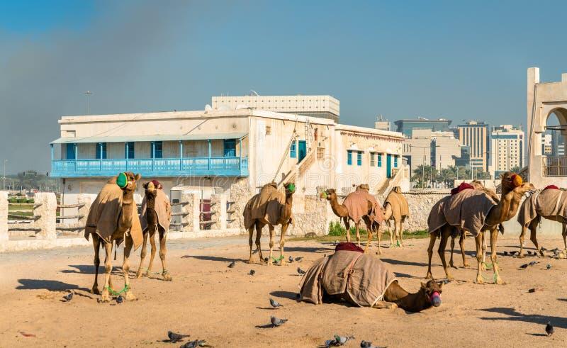 Wielbłąda rynek przy Souq Waqif w Doha, Katar obraz stock