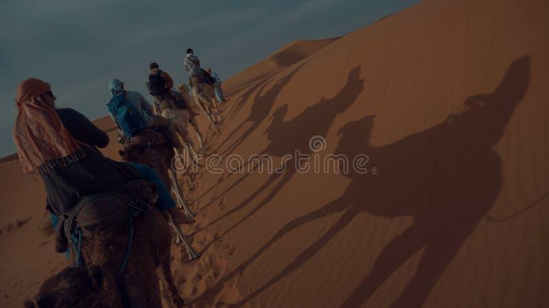 Wielbłądy jedzie w saharze zdjęcie stock