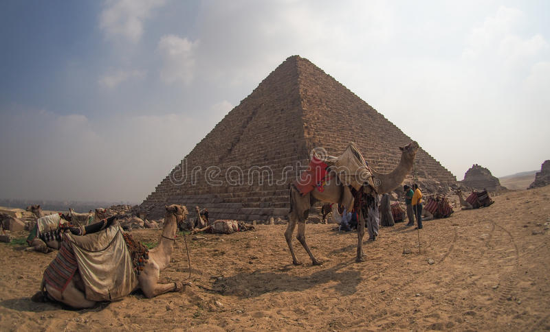 Wielbłądy przed Giza ostrosłupami, Egipt zdjęcie stock