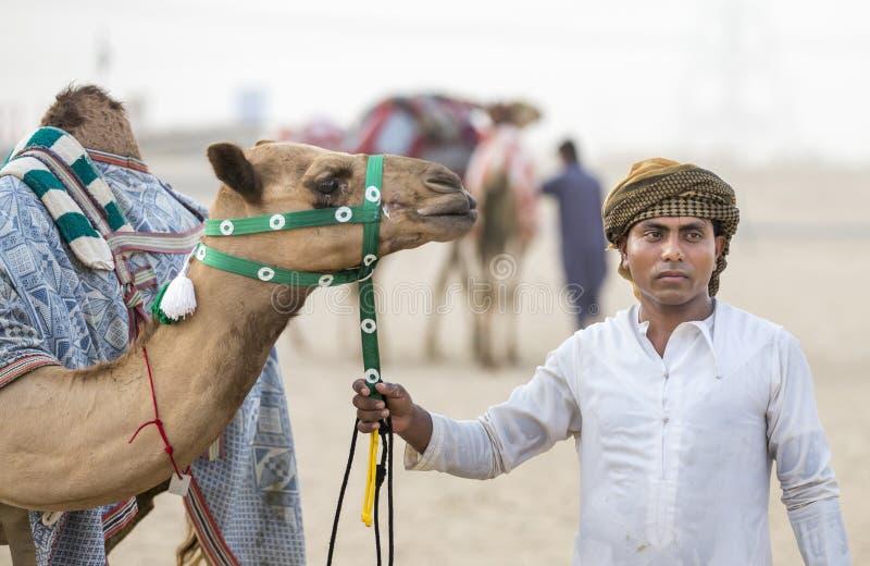 Wielbłądy w pocierania al Khali pustyni przy Pustą ćwiartką w Abu Dhabi, zdjęcie royalty free