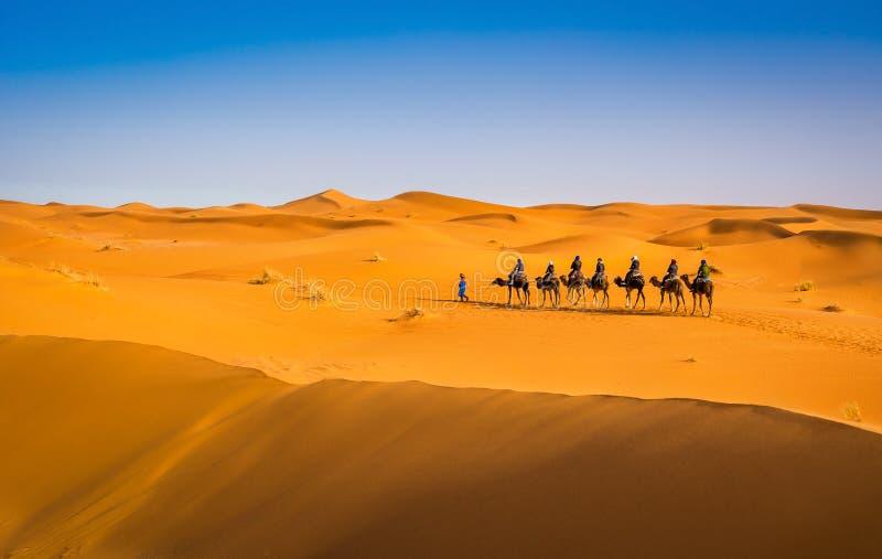 Wielbłądzi karawanowy iść przez piasek diun w pięknej saharze Zadziwiająca widok natura Afryka Artystyczny obrazek pi?kno obrazy royalty free