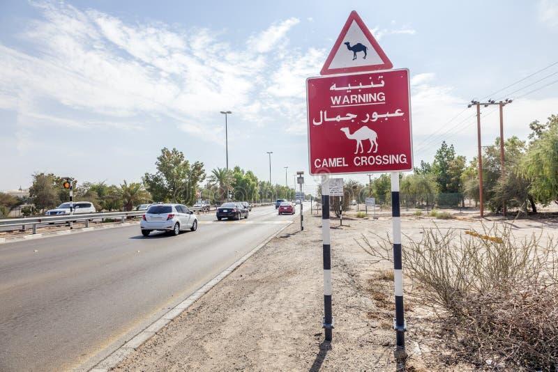 Wielbłądzi skrzyżowanie podpisuje wewnątrz Abu Dhabi, UAE obrazy royalty free
