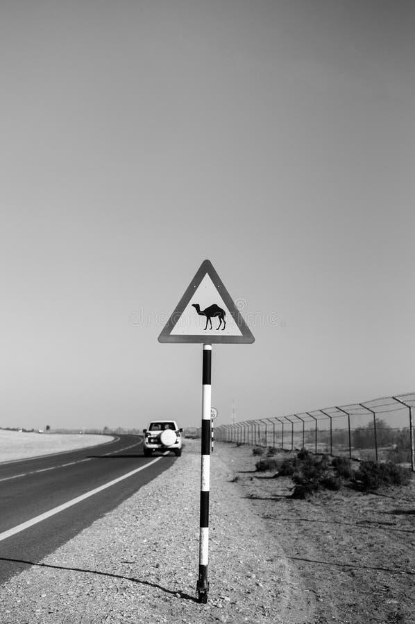 Wielbłądzi skrzyżowanie znaka ulicznego w Al Wathba pustyni, Abu Dhabi, UAE zdjęcie royalty free