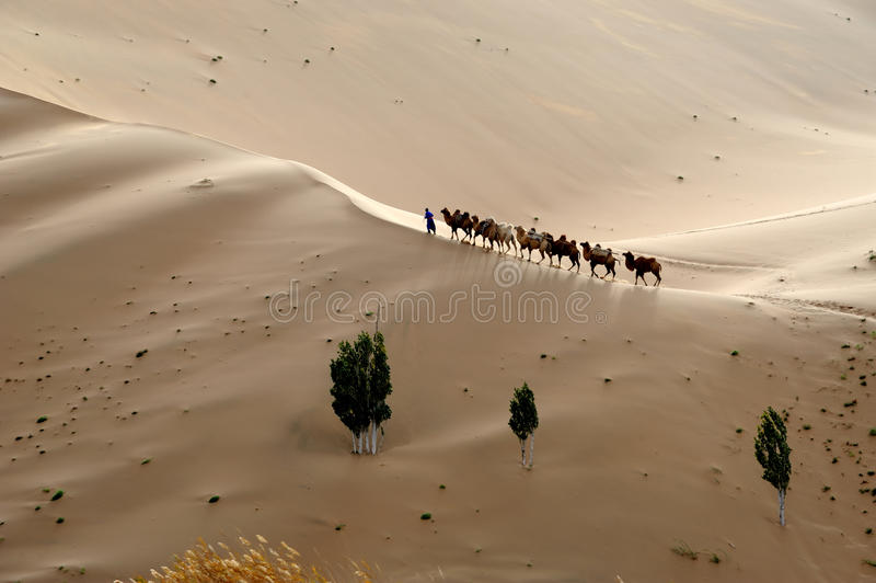 Wielbłądzia karawana w pustyni obraz stock
