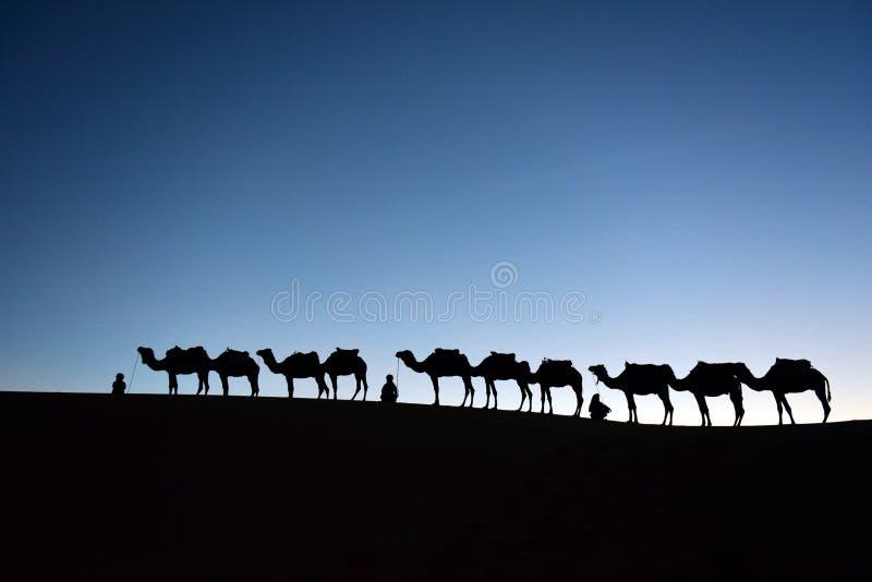 Wielbłądzia karawana w saharze, marokańczyk zdjęcia royalty free
