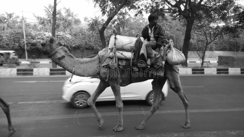 Wielbłądzia przejażdżka zdjęcie royalty free