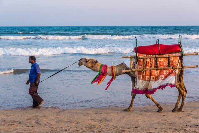 Wielbłądzia przejażdżka na dennym brzeg zdjęcie royalty free
